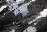 Bệnh tiềm ẩn do ăn nhiều cá nước biển sâu