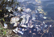 Hơn 2 tỷ tiền mặt trôi nổi trên sông