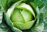 Lý do mẹ nên cho con ăn bắp cải