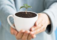 10 công dụng tuyệt vời của bã cà phê