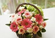 Cách cắm hoa đẹp rực rỡ trang trí nhà mình
