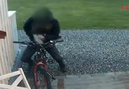 """Làm """"chuyện ấy"""" với... xe đạp"""