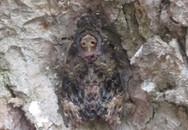 Đổ xô khấn vái đôi bướm lạ có hình mặt Phật