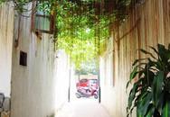 Thăm ngôi nhà ngập tràn sắc xanh tại Trung Kính - Hà Nội