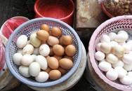 Bệnh tiềm ẩn do ăn phải trứng gà nhiễm kháng sinh