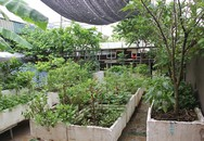 Trồng rau quả ở sân thượng, đầu tư vài chục nghìn ăn cả năm