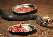 Nuôi 50.000 con rắn, bất chấp nhiều lần suýt bỏ mạng