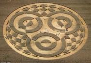 Tròn mắt với vòng tròn khổng lồ xuất hiện trên cánh đồng
