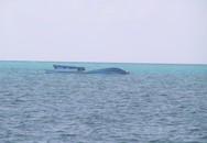 Một ngư dân rơi trên biển
