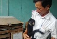 Con vượn đen quý hiếm được thả về môi trường tự nhiên