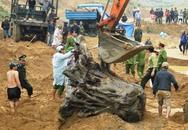 Quảng Bình: Đã kéo được gốc gỗ huê bạc tỉ lên bờ