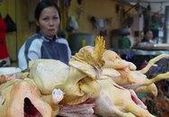 Nhận diện gà chứa kháng sinh