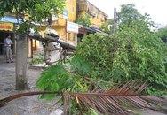 Cận cảnh sự tàn phá sau bão số 6