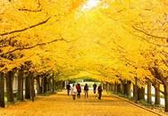 Ngắm những con đường mùa thu lãng mạn nhất thế giới