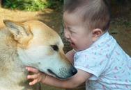 Bé 2 tuổi bị chó cắn vào mặt