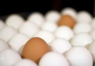 Trứng: Nguồn cung cấp năng lượng tốt nhất