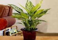 Bài trí cây xanh trong nhà đúng cách