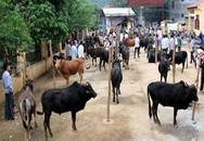 Rộn ràng và thú vị chợ bò