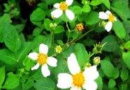 Xao xuyến những nẻo đường hoa Xuyến chi