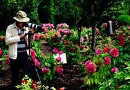 Mê mẩn lễ hội hoa mẫu đơn ở Hà Nam