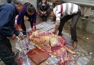 Mổ thịt cá mập, trăn khủng ngay trên vỉa hè