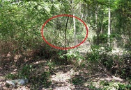 Vụ xác chết lõa thể treo trên cây: Nạn nhân bị cột chặt vùng kín