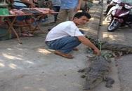 Rợn người cá sấu sống bày bán trước cổng chợ