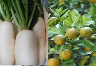 Những thực phẩm giúp bạn tiêu hóa tốt