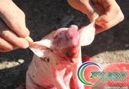 Hình ảnh chú lợn con lai voi gây sốc ở Trung Quốc