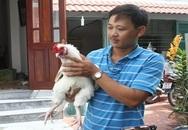 Bỏ tiền triệu săn gà cổ thuần Việt ăn Tết