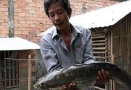 Đổ xô đi xem cá lóc nặng 6 kg