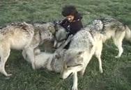 """Video đàn sói """"ôm hôn"""" nhiếp ảnh gia gây sốt"""