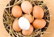 Cách lựa chọn trứng gà