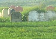 Kinh hoàng rau trồng trên mộ, tưới bằng nước thải