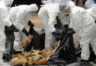 Việt Nam chủ động đối phó với dịch bệnh