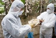 Chưa phát hiện cúm H7N9 từ mẫu gia cầm nhập lậu