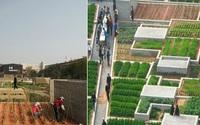 """""""Hô biến"""" nhà máy bỏ hoang thành trang trại rau sạch xanh mướt giữa lòng thành phố"""