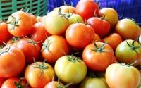 Kiếm 3 triệu đồng/ngày nhờ trồng cà chua lạ, ngon, bổ, rẻ