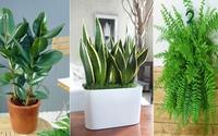 Nhà dùng điện thoại, TV suốt ngày, nhất định phải trồng 10 loại cây hút sóng và bức xạ này