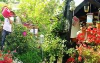 Khu vườn rau thơm rộng đến 400m² của ông bố 53 tuổi tại Đức khiến bao người ngỡ ngàng