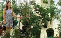 Chỉ mới trồng được 8 tháng nhưng mẹ Sài Gòn đã có vườn hoa hồng sân thượng tuyệt đẹp