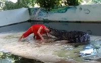 Nghệ sĩ xiếc Thái Lan vẫn đang nguy kịch sau khi bị cá sấu ngoạm đầu lúc đang biểu diễn