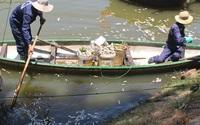Đà Nẵng: Cá chết nổi trắng kênh Phú Lộc, bốc mùi hôi thối