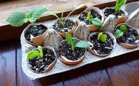 10 ý tưởng biến những món đồ cũ phổ biến trong nhà thành chậu gieo hạt lý tưởng