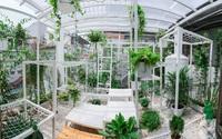 """Khu vườn """"điều hòa"""" trên sân thượng không sợ nắng mùa hè của chủ nhân 9x ở Thái Thịnh, Hà Nội"""