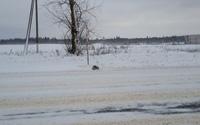 Thấy con vật đông cứng giữa tuyết, người đàn ông đem về và điều kỳ diệu xảy ra