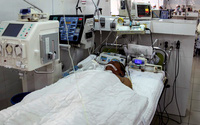 Người đàn ông 63 tuổi bị ngưng tim, chết não do ong đốt