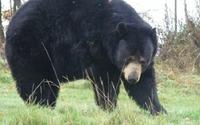 Nghe tiếng nhai, tỉnh dậy thấy gấu đang gặm đầu mình