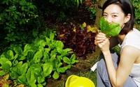 Vợ Bae Yong Joon tự tay trồng và chăm sóc rau sạch trong biệt thự 120 tỷ đồng