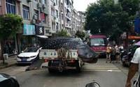 Ngạc nhiên cảnh cá khổng lồ 'diễu hành' trên phố
